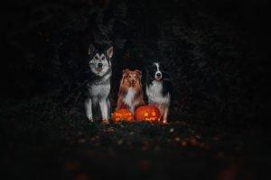 Halloween Krimiwanderung