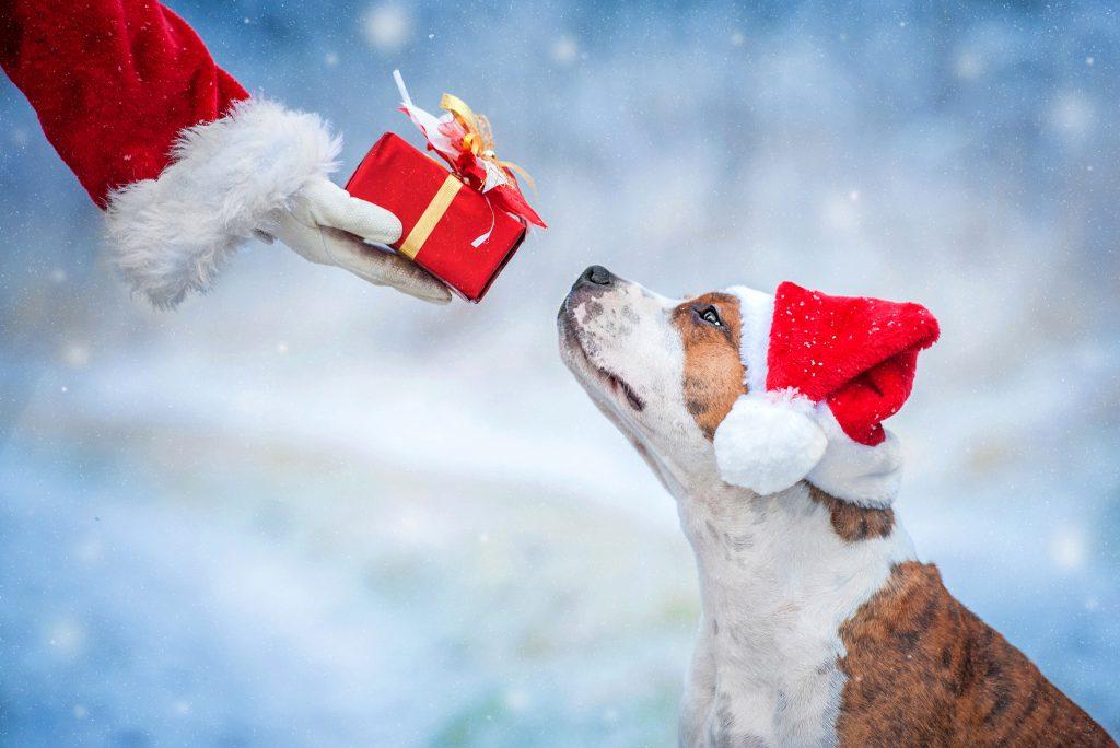 Weihnachts Krimiwanderung